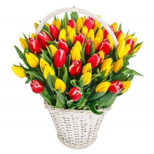 rainbow-tulips